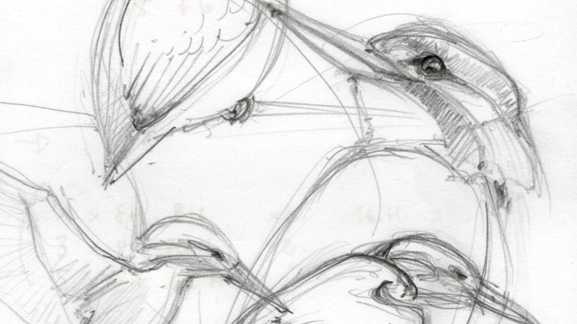 dessin-martin-pecheur